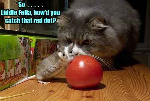 cat fella catch how red dot caption little mouse