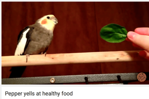 image birds food Same