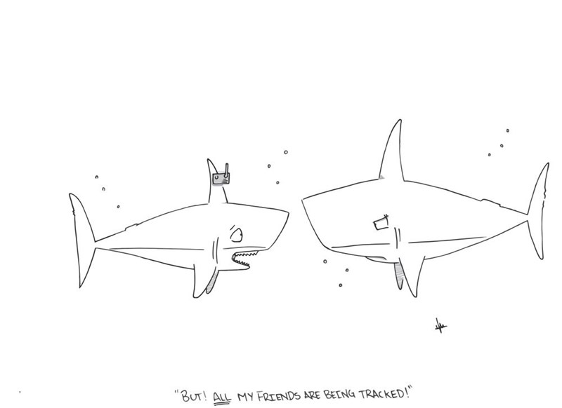 web-comics-that-moment-when-the-shark-is-tracked