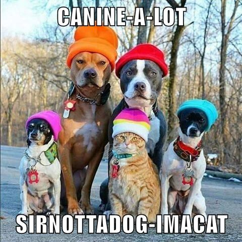 CANINE-A-LOT   SIRNOTTADOG-IMACAT
