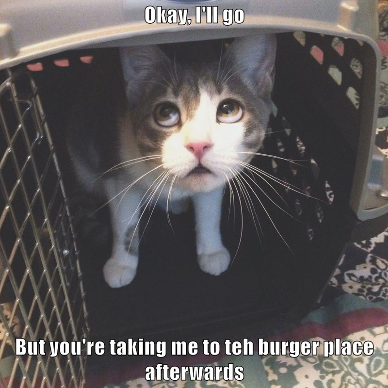 Okay, I'll go  But you're taking me to teh burger place afterwards