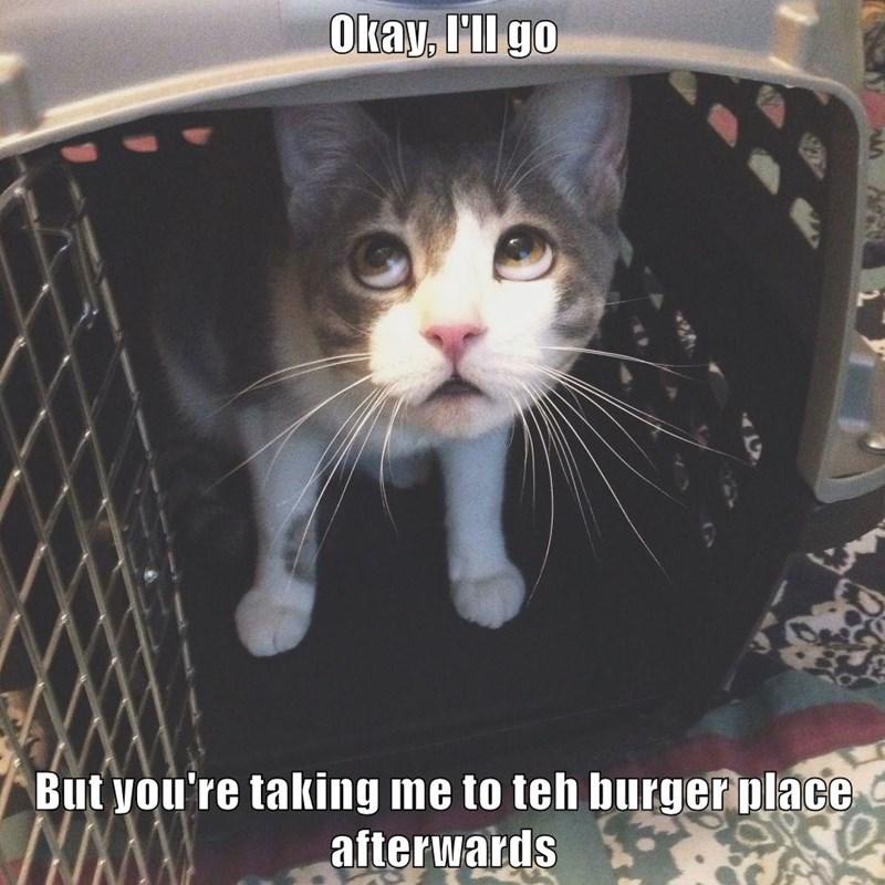 animals burger box cage caption Cats - 8800469248