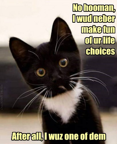 your fun life never kitten choices make caption - 8800554752