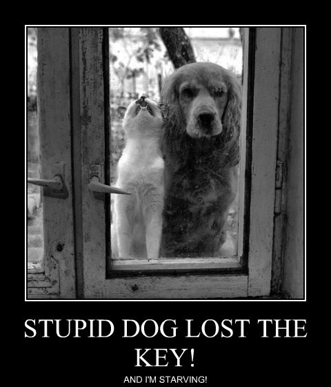 lolcats - Dog - STUPID DOG LOST THE ΚΕY! AND I'M STARVING!