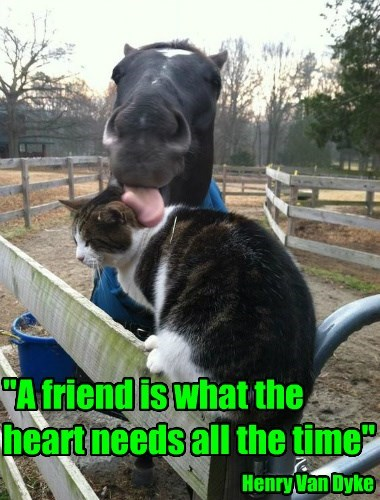 """""""A friend is what the heart needs all the time"""""""