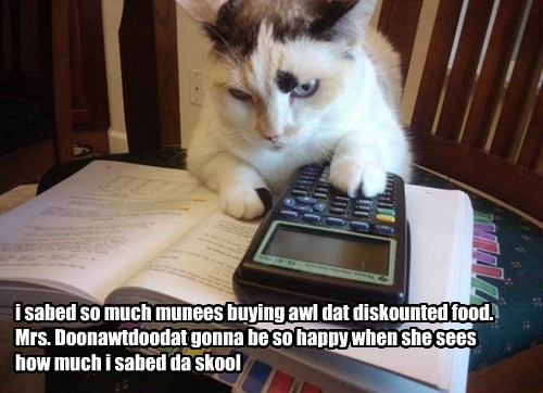calculator,caption,Cats,money