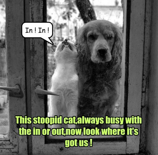 cat dogs outside stupid