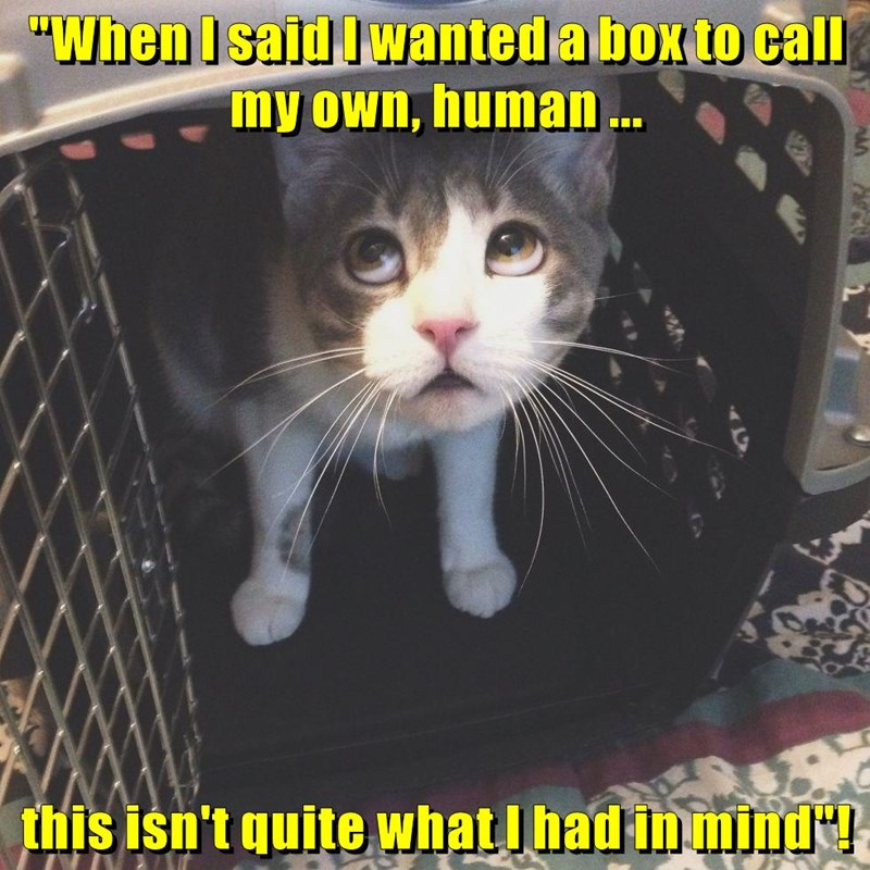 animals in wanted cat box had mind caption - 8800618240
