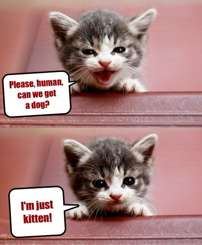 get kitten please caption - 8800619776