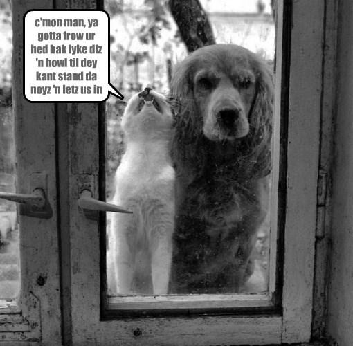 howl cat dogs head back caption throw - 8800625920