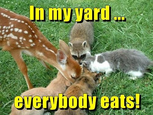 animals eats yard my caption Cats everybody - 8800635136