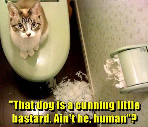 dogs,toilet paper,blame,caption,Cats
