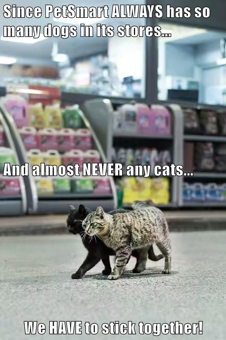Since PetSmart ALWAYS has so many dogs in its stores... And almost NEVER any cats... We HAVE to stick together!