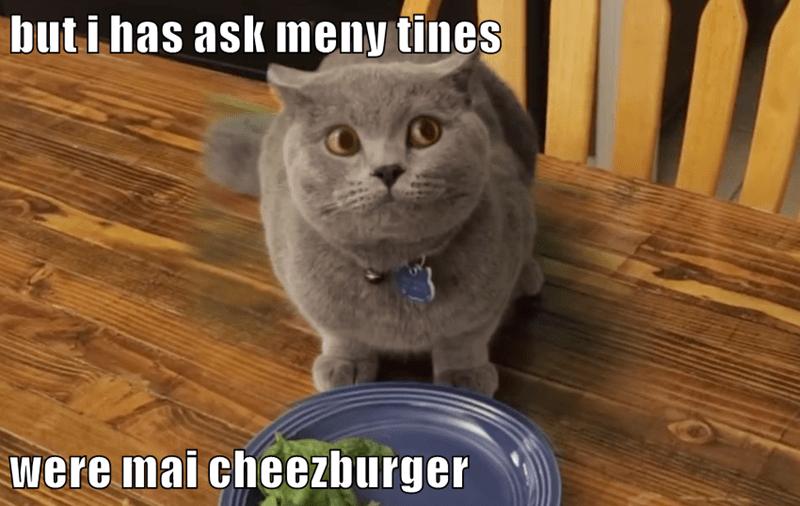 animals cheezburger diet caption Cats - 8800696576