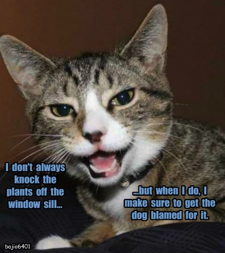 I  don't  always  knock  the  plants  off  the  window  sill...