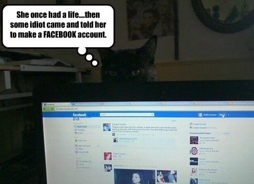 life,facebook,caption,Cats