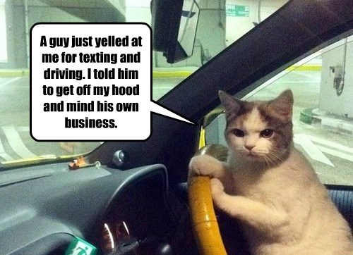 yelled cat hood off driving guy caption texting - 8800746496