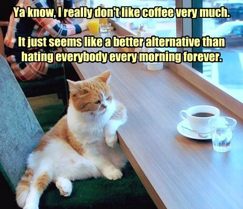 like cat alternative better coffee hating dont caption everybody