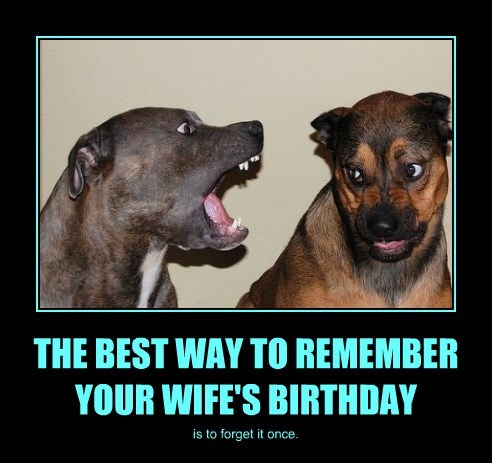 dogs best birthday wife's way caption remember - 8800751104
