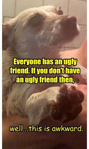 dogs,Awkward,everyone,friend,caption,ugly