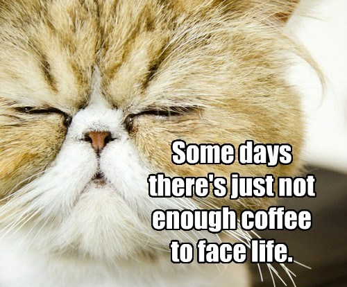 cat face life coffee not caption enough