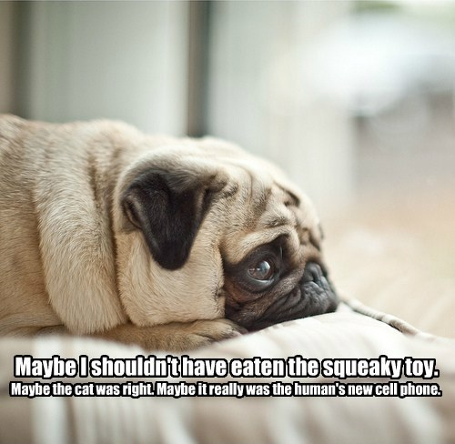 dogs,toy,pug,maybe,caption