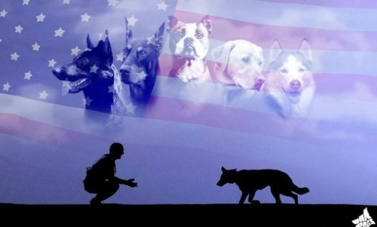 MEMORIAL DAY 2016 ~ Honoring The Service Dogs Who Support Our Troops