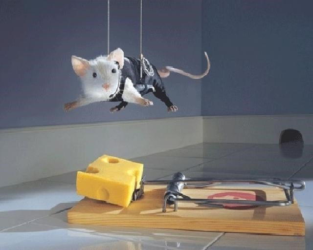 danger mouse mice funny rodents mouse - 8800847616