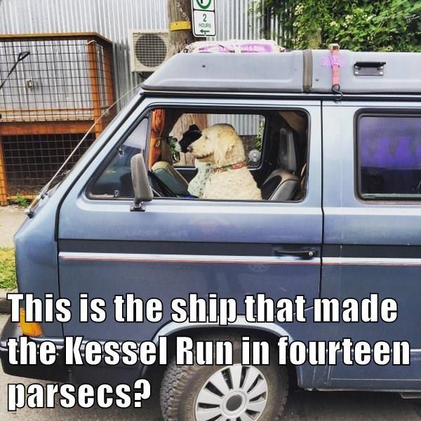 animals dogs parsecs ship caption kessel run - 8800858880
