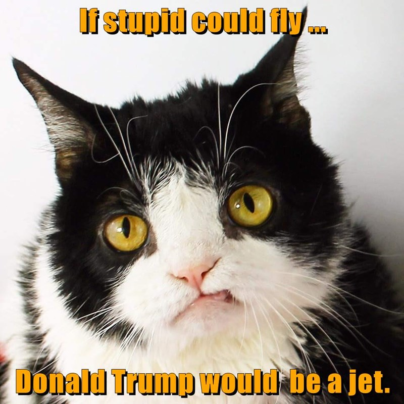 animals donald trump pokey caption Cats stupid
