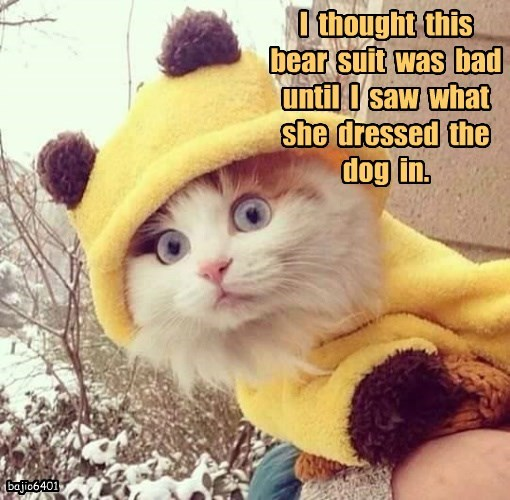 lolcats - Cat - I thought this bear suit was bad until I saw what she dressed the dog in. bajio6401