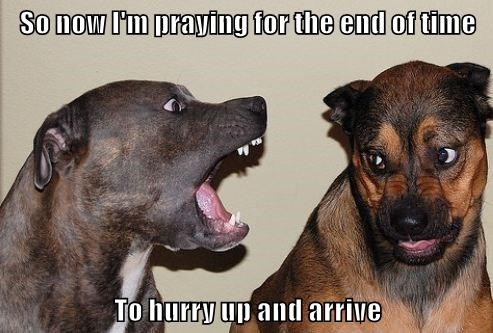 animals dogs time end praying hurry up caption arrive - 8800949760