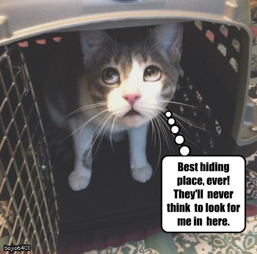 box caption Cats hiding - 8800950016