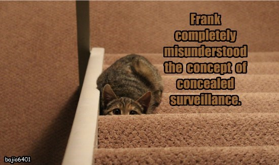 lolcats - Cat - Frank completely misunderstood the concept of concealed surveillance. bajio6401