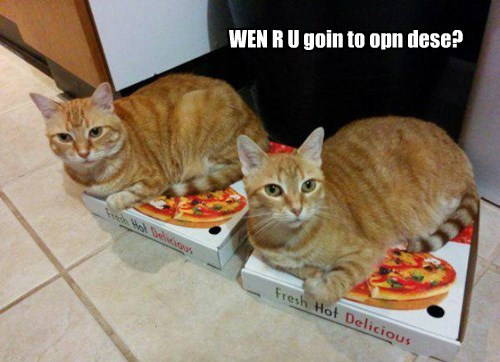 pizza box open caption Cats