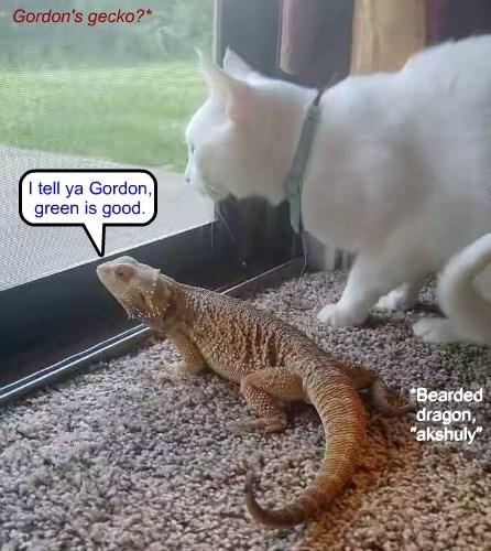 Gordon's gecko? (Wall Street [1987])