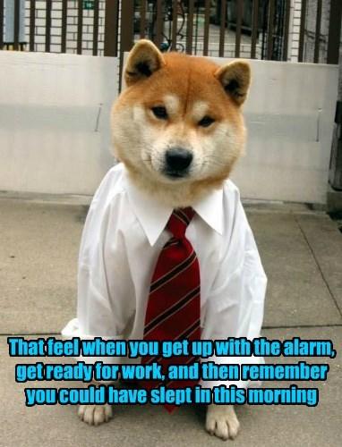 dogs alarm feeling work ready slept set caption remember - 8801024256