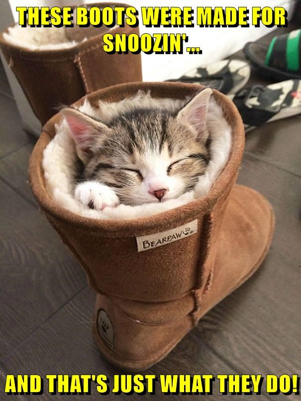 lolcats - Cat - THESE BOOTS WERE MADE FOR SNOOZIN. BEARPAW AND THAT'S JUST WHAT THEY DO!