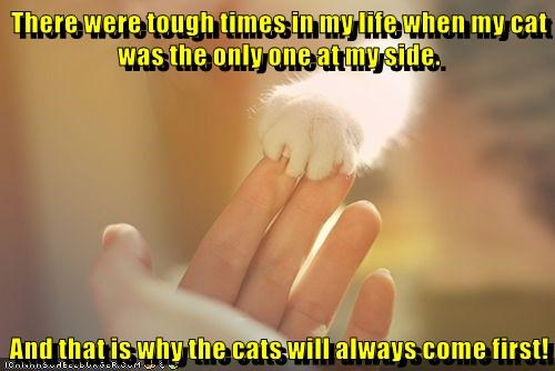 animals cat only first come side one tough caption times - 8801114368