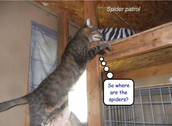 Spider patrol