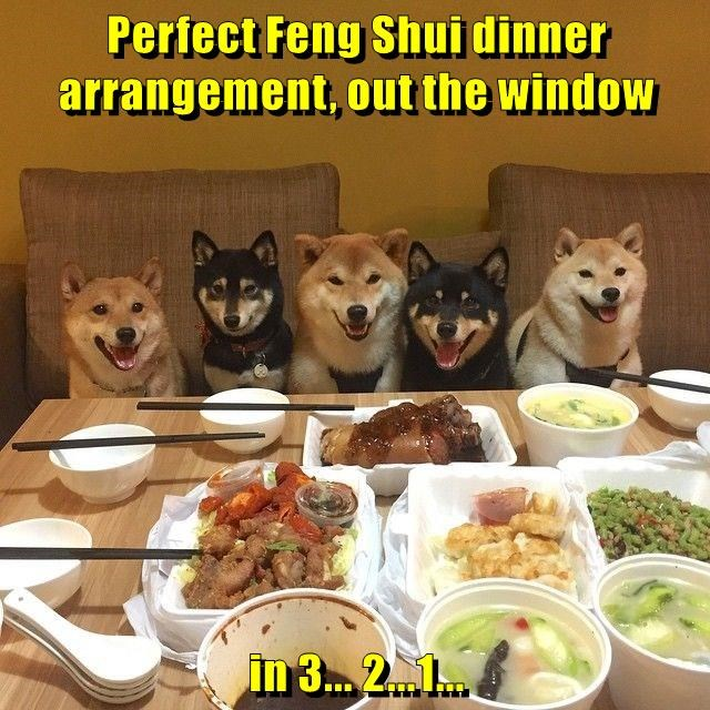 animals dogs out feng shui 3 2 1 perfect dinner caption window - 8801139712