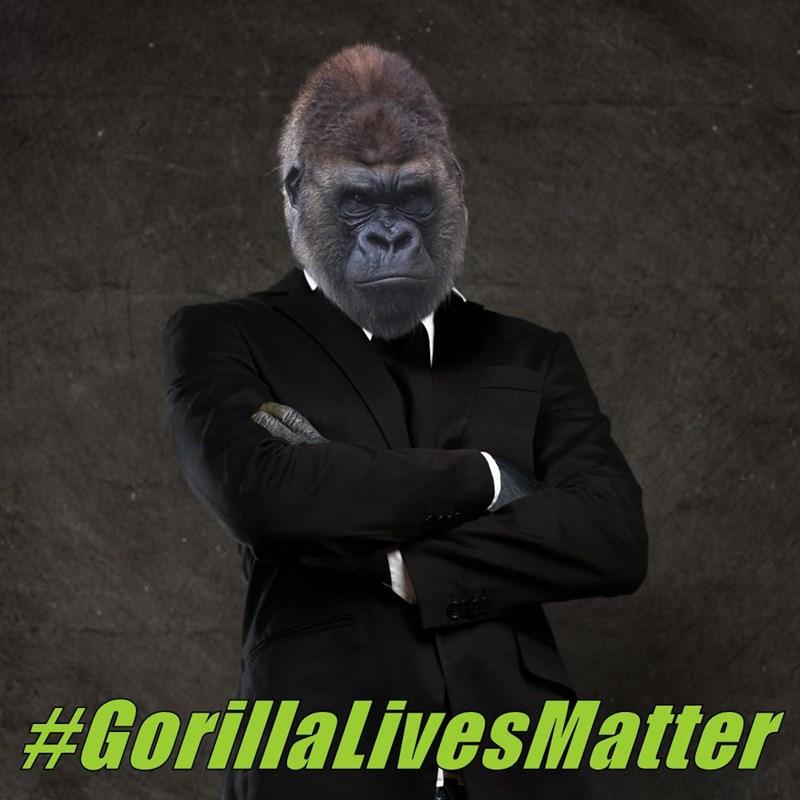 #GorillaLivesMatter