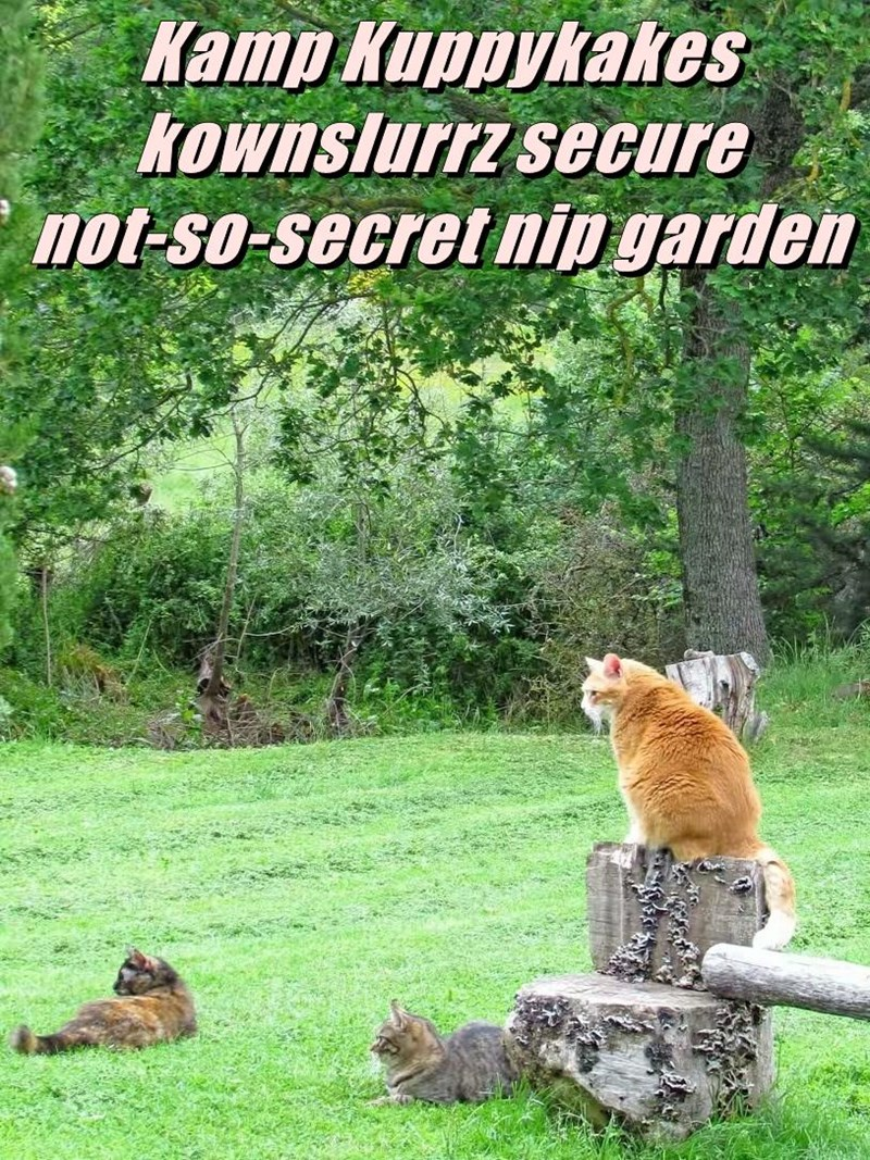 Kamp Kuppykakes kownslurrz secure                                              not-so-secret nip garden