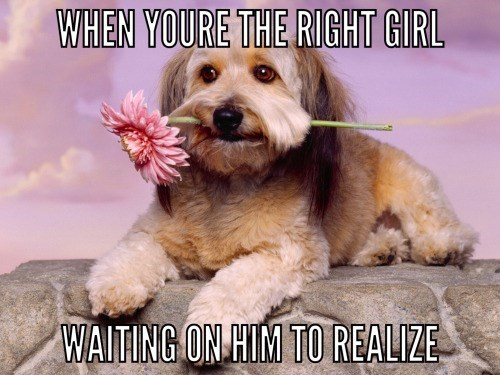 dogs Memes dating - 8801195264