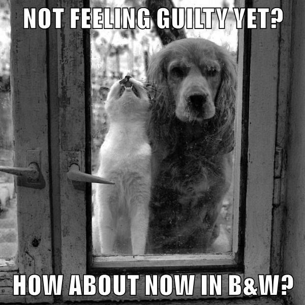 NOT FEELING GUILTY YET?  HOW ABOUT NOW IN B&W?