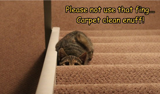 Please not use that fing... Carpet clean enuff!
