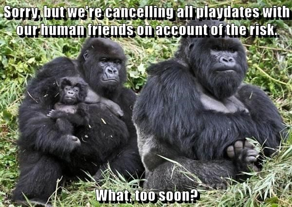 Sorry, but we're cancelling all playdates with our human friends on account of the risk.  What, too soon?
