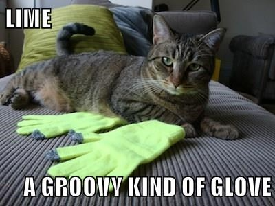 LIME  A GROOVY KIND OF GLOVE