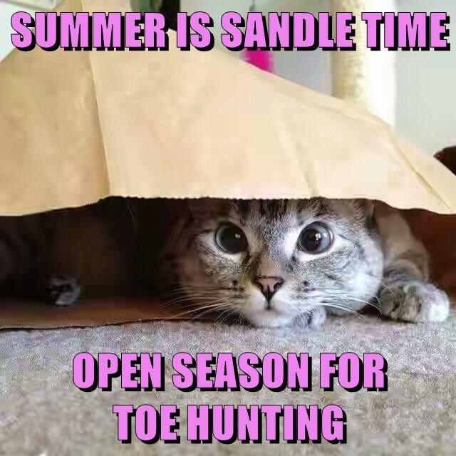 cat,sandle,summer,toe,open,caption,hunting,season