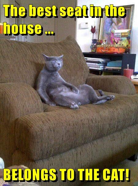 animals house couch seat caption Cats